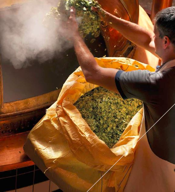flanders making beer with hops going into wort