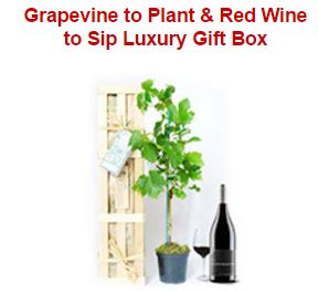 Grapevine to Plant & Red Wine to Sip Luxury Gift Box